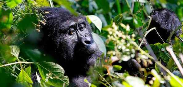 Gorillas and Game Parks Overland Tour