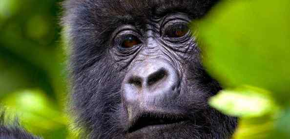 Gorillas and Southern Discoverer Overland Tour